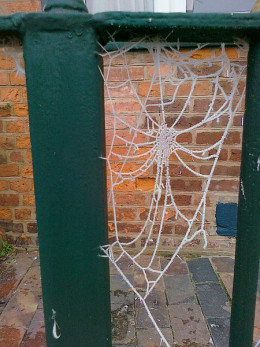 A frosted spiderweb.