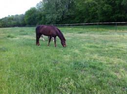 Zero Grazing in a grassy field.
