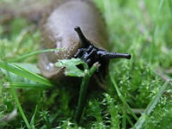 Suburban Hunter: A Story about How to Get Rid of Garden Slugs