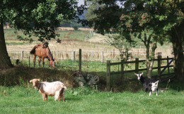 Farm animals behave differently before storms approach