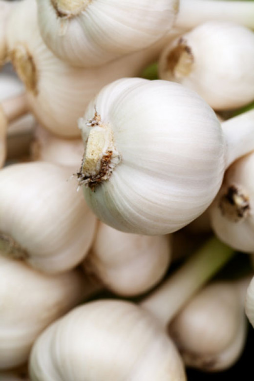 Garlic has been shown to be helpful with controlling high blood pressure.