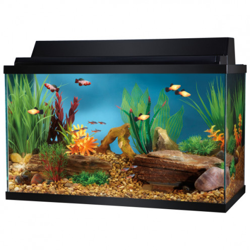 Pet Fish For 10 Gallon Tank Top Fin 10 Gallon Hooded