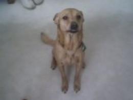 Reeses, the dog, my # 7 joy!