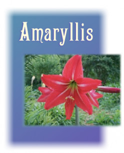 Amaryllis and a Garden Kitty: Number 4 in a Garden Photo Series