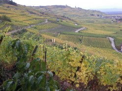 French Wine Regions - Alsace