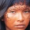 Yanimamo profile image