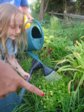 Cooking with Kids: An Iron Chef and Garden Activity