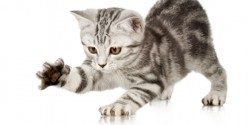 Declawing your Cat - Long Term Effects and Why You Should Not Declaw