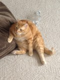 What to do if Your Cat is Trying to Kill You - Survival Tips.