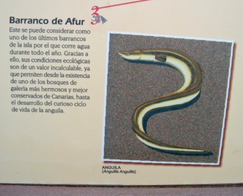 Information board in Taborno showing that European Eels live in the ravine in Afur. Photo by Steve Andrews