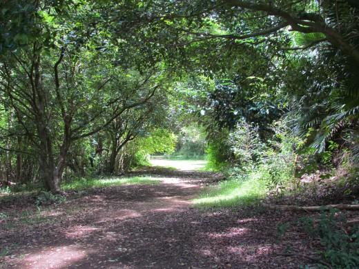 Serene pathways characterize Hoomaluhia