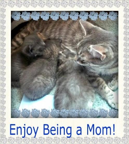 Enjoy Being a Mom