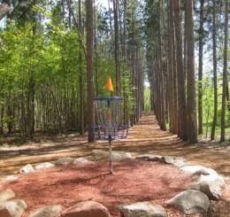 Blue Ribbon Pines