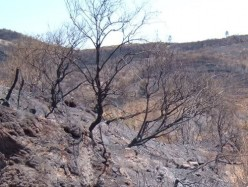 Tenerife fires in Erjos area destroy laurel forests