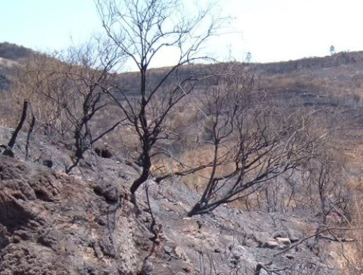 After the Erjos fire in 2007. Photo by Steve Andrews