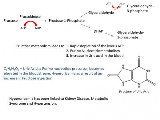 Fructose metabolism pathway and its effects.