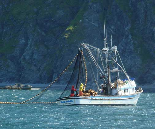 A smaller kind of seiner in Alaskan waters