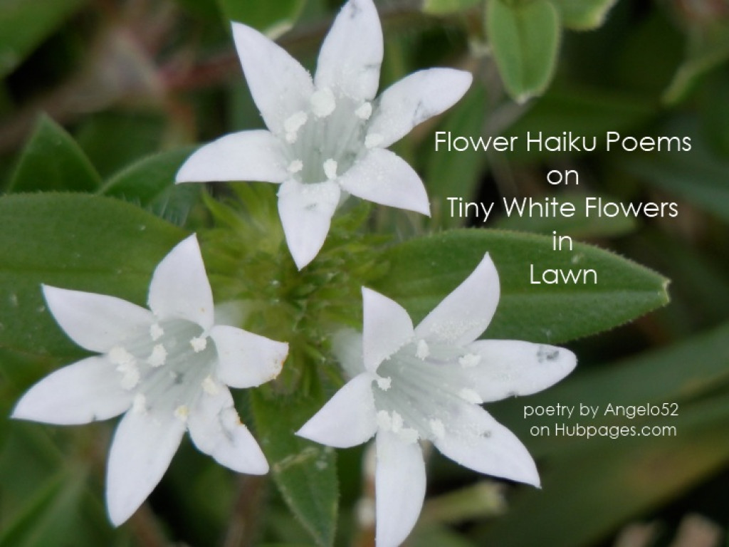 haiku poems about flowers - photo #1