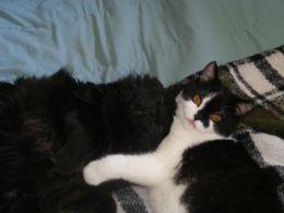 The late Cairo and Munchkin sharing love.