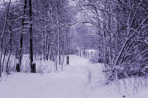 Winter: Snowy woods.