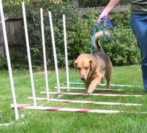 A Dog Exercise Obstacle Course is a great exercise and they actually have dog tournaments all over the world that test your pet.