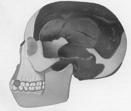 1922 Illustration of the Piltdown Man skull