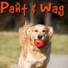 Dog Fitness profile image