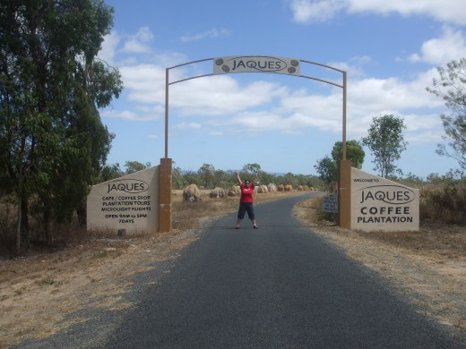 Jaques Coffee Plantation on the Atherton Tablelands in North Queensland