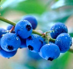 Health Benefits of Blueberries and Blueberry Nutrition Facts Chart