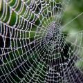 Animal Spirit Guides Meanings: Spider Spirit Guide & Mythology