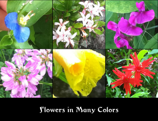 These are just some of the flowers we saw on our Scavenger Hunt in the Woods.