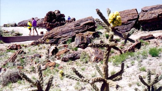 Petrified Forest National Park - Look at the size of people in comparison to those fallen trees which turned to stone.  Those were some large trees!
