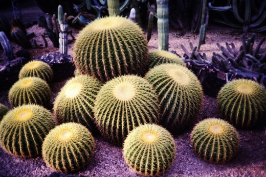Desert Botanical Garden which can be enjoyed in Phoenix.