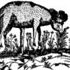 Vegetable Lambs profile image