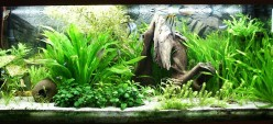 Learn How To Choose And Decorate An Aquarium With Plants