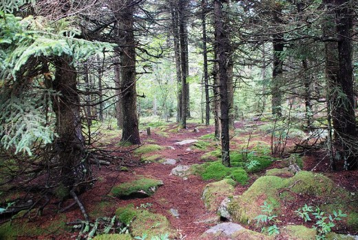 Spruce Forestis a place to forage for seasonings and mushrooms