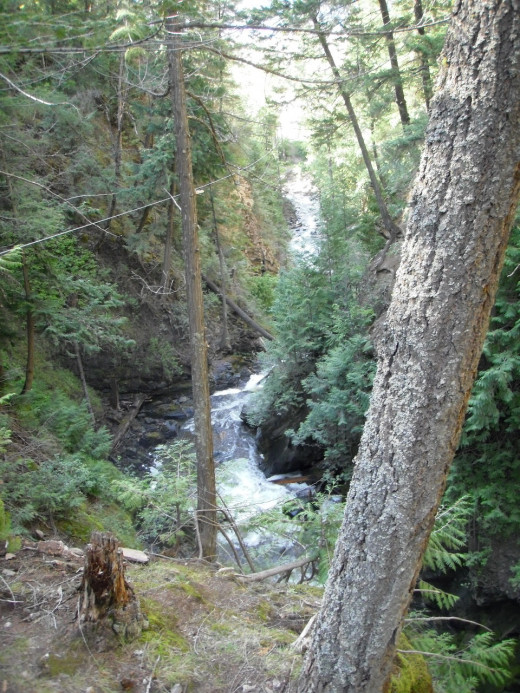 Forest under the falls in Chase Canyon