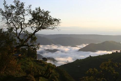 Near Virunga