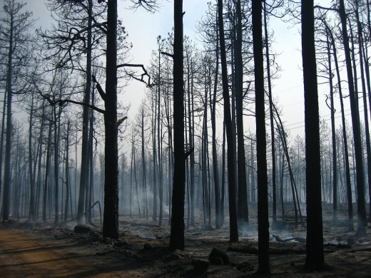 Trees burned up around the site of a fallen angel. Sometimes the burn area is large, sometimes it is small.