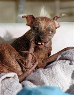 Ugliest Dog Breed