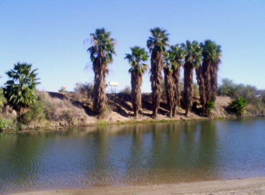 Palm trees on the California/Arizona border.