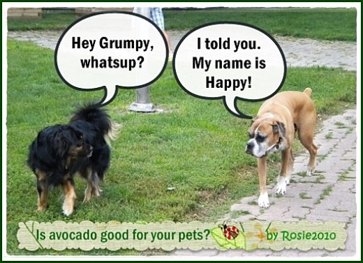 Is Avocado Good for Your Pets? Is Avoderm safe?