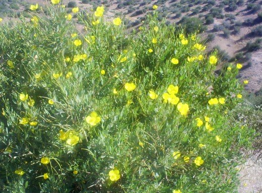 Little yellow flowers in bloom.