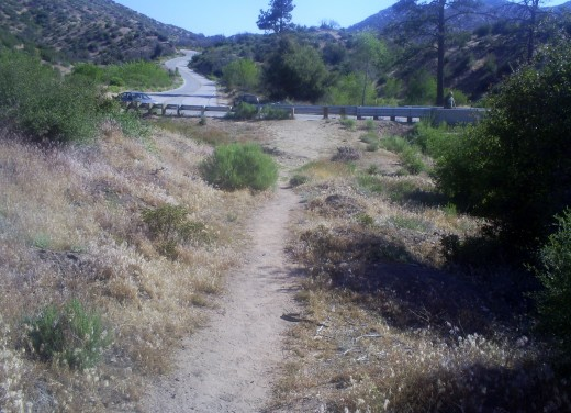 Hiking on a trail up in the San Bernardino Mountains.