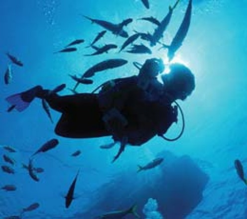 Swimming with the fish.  It is amazing that where I have been to dive the fish will swim right up to you.