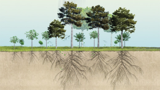 The roots of plants and trees bind the soil together