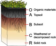 The Formation of soil
