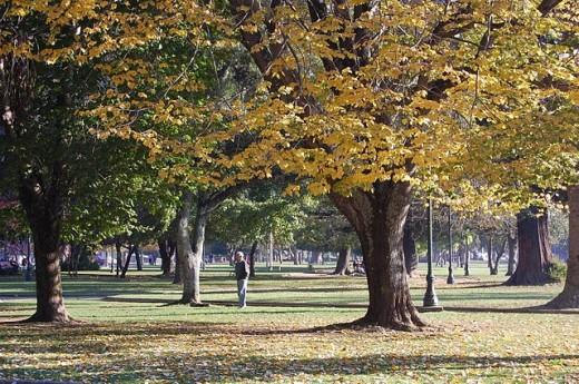 The Ecuador Park, Concepcion Chile, in beautiful autumn colors