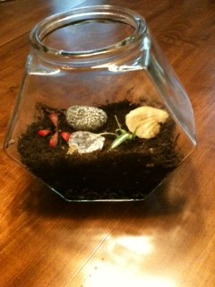 Small fishbowl terrarium made as a family project
