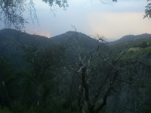 Trees in the San Bernardino Mountains with an interesting ray of light in the sky.